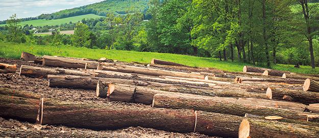 木材調達と森林保全への貢献