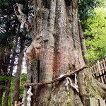 玉置(たまき)神社の神代杉