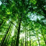 木の成長とその証